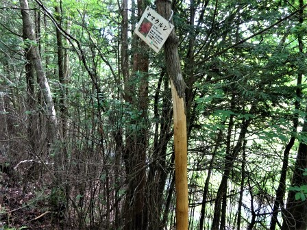 みんなの森活動日記_d0105723_08150184.jpg