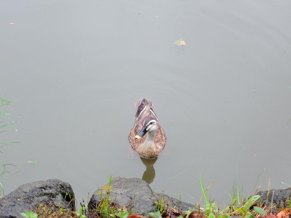 ある風景:Kikuna pond, Yokohama@July #3_c0395834_11491206.jpg