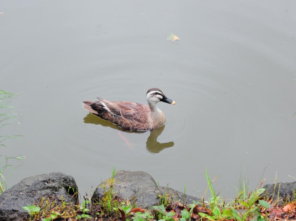 ある風景:Kikuna pond, Yokohama@July #3_c0395834_11491214.jpg