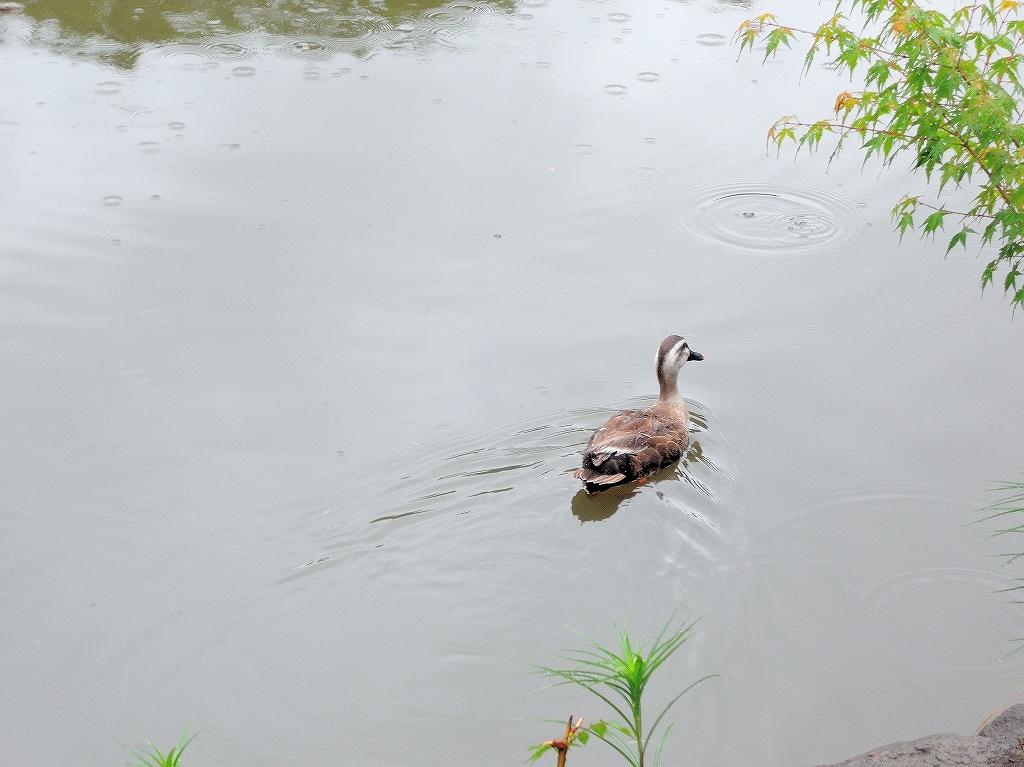 ある風景:Kikuna pond, Yokohama@July #3_c0395834_11491329.jpg