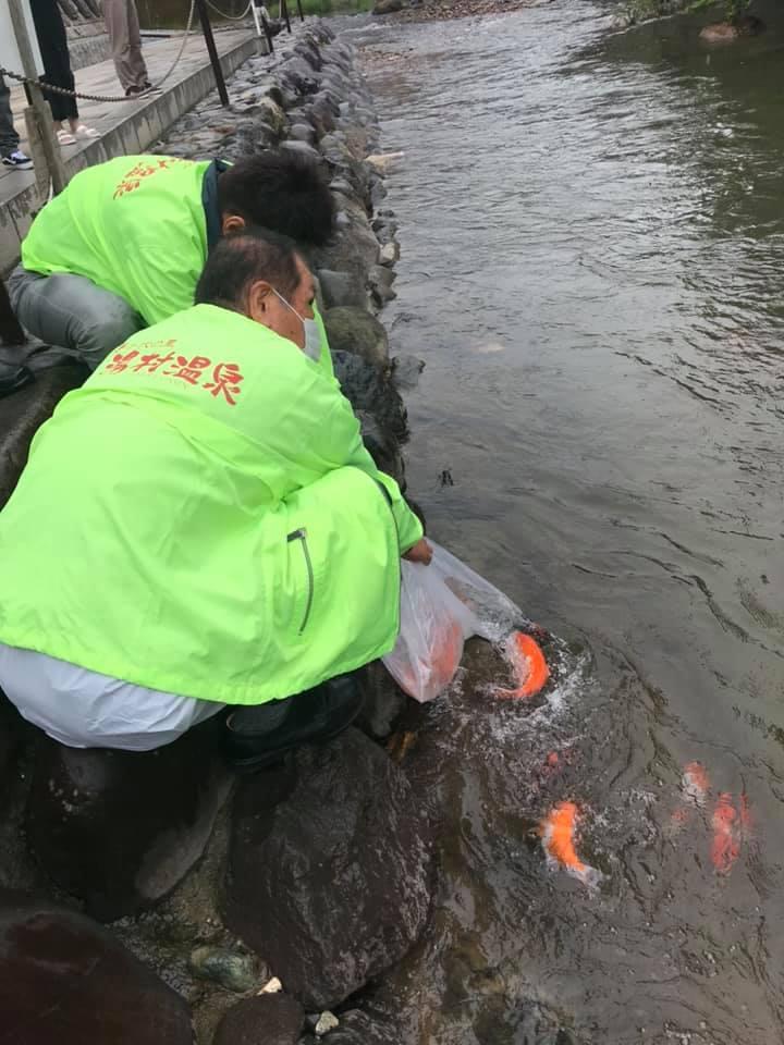 【 湯村温泉観光協会、春来川に鯉の放流 】_f0112434_12040745.jpg
