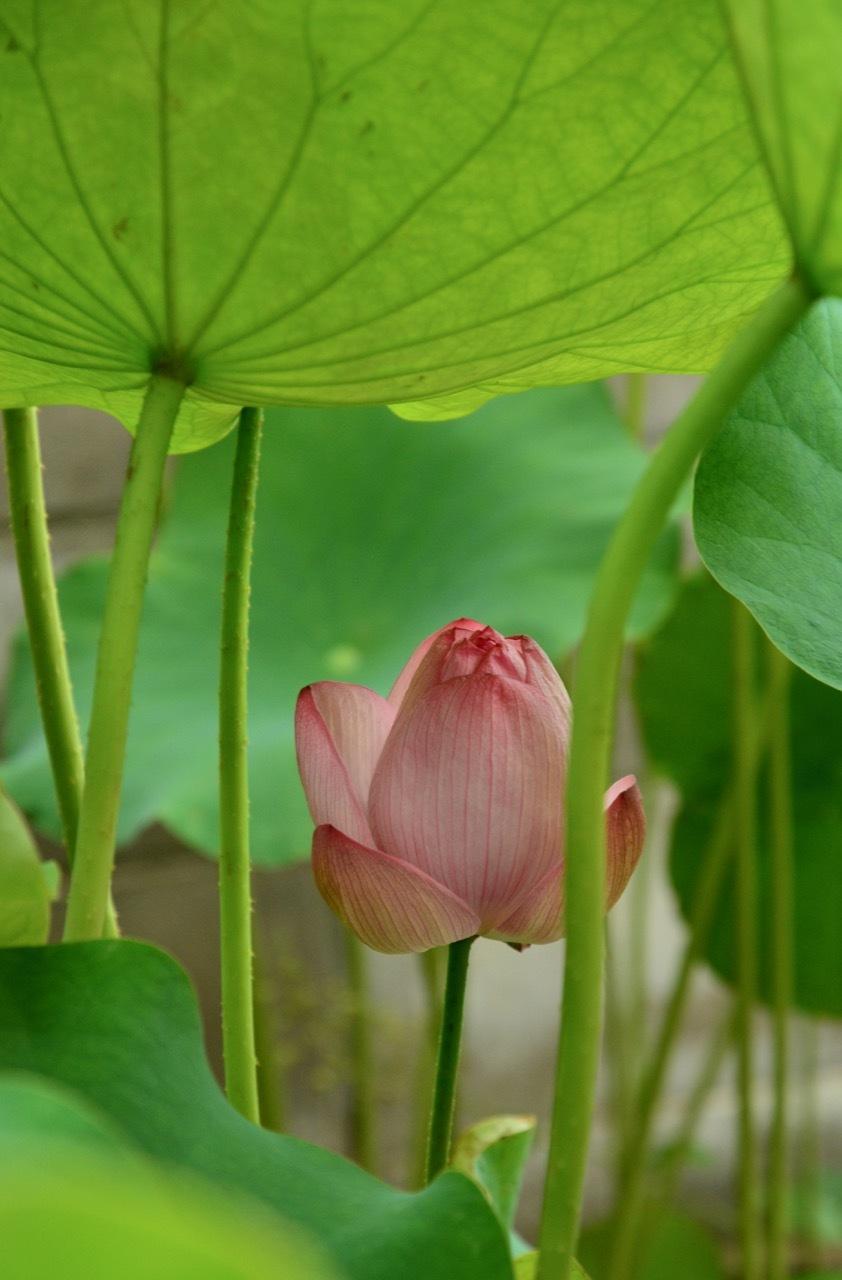 我が家の 花たち_e0099737_13284444.jpg