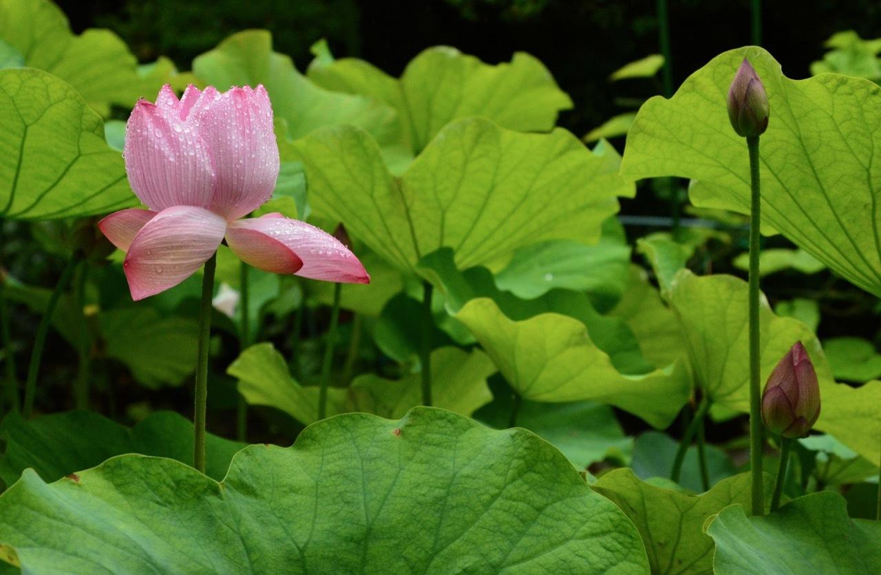 我が家の 花たち_e0099737_13293673.jpg