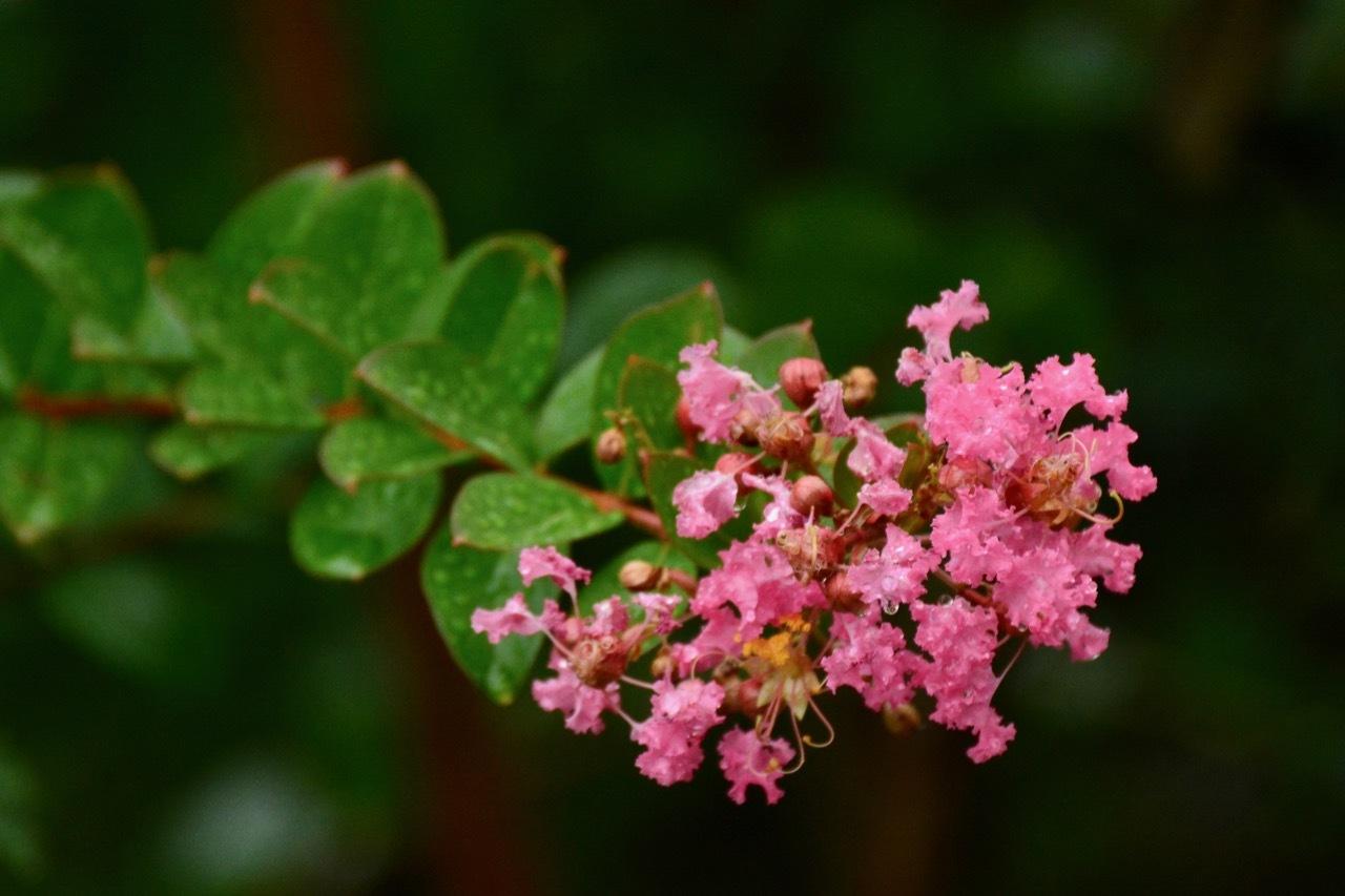 我が家の 花たち_e0099737_13310950.jpg