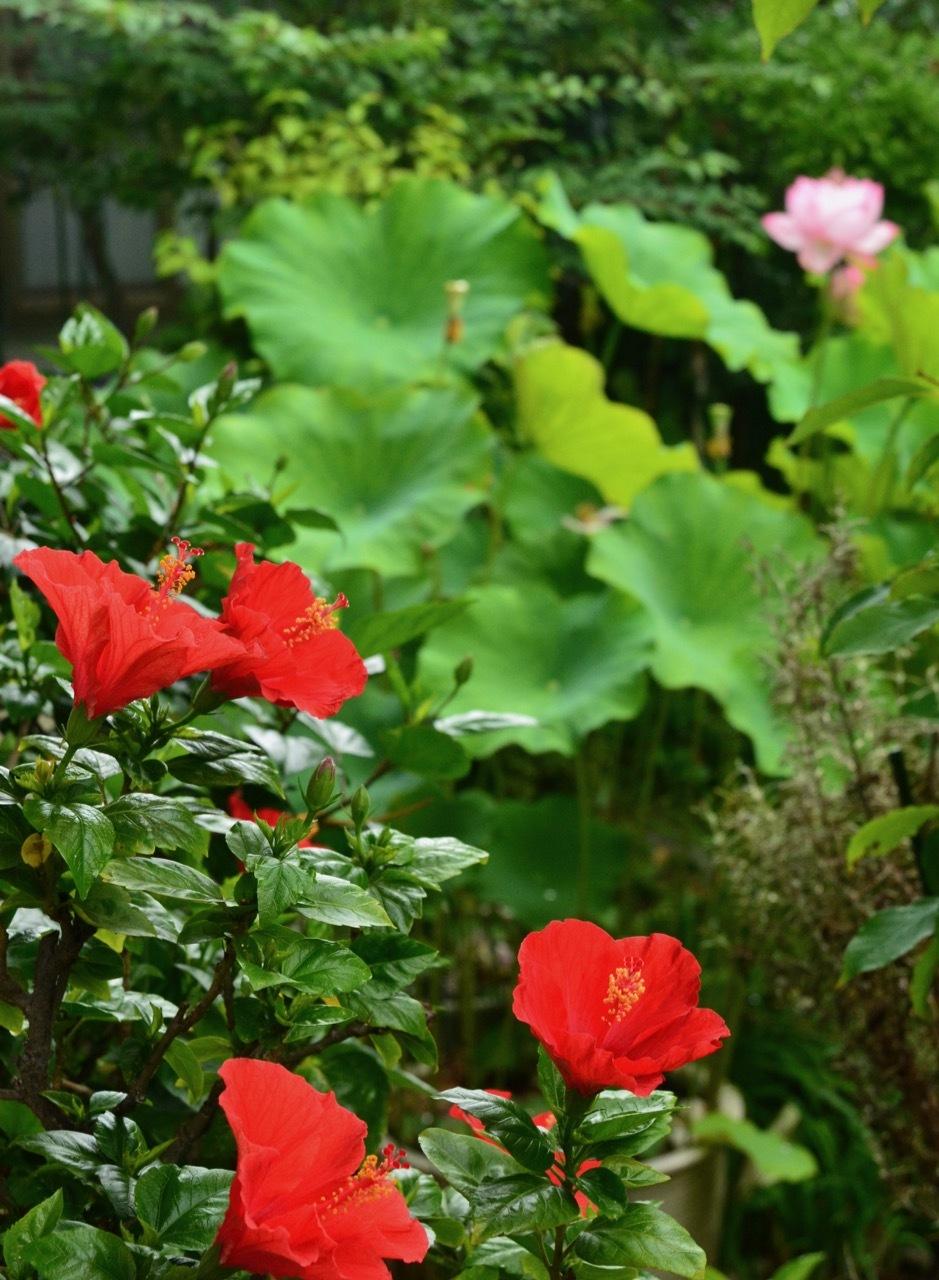 我が家の 花たち_e0099737_13323701.jpg