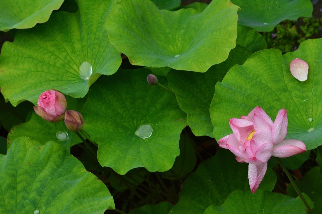 我が家の 花たち_e0099737_13325202.jpg