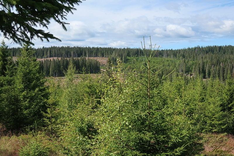 西の森に_a0353839_23151987.jpg