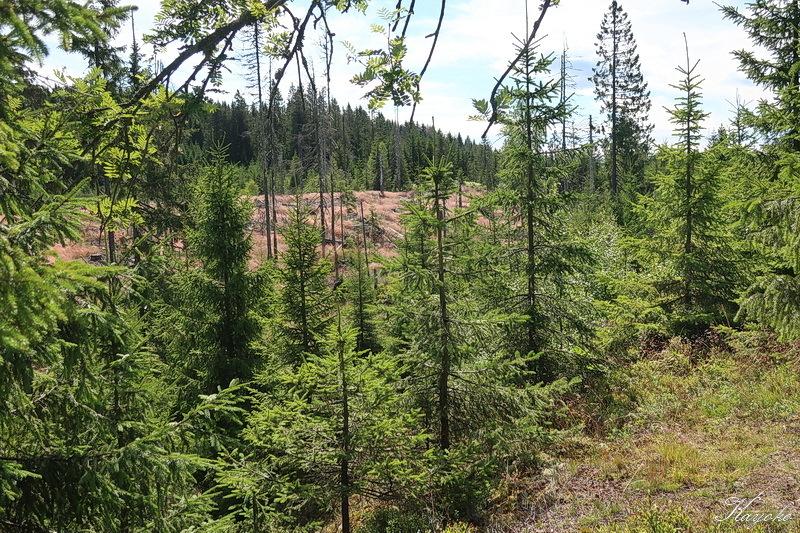 西の森に_a0353839_23154106.jpg