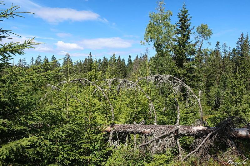 西の森に_a0353839_23155770.jpg