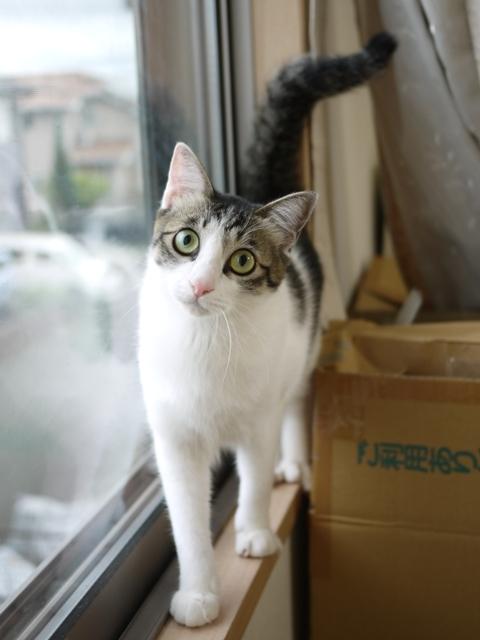 猫のお留守番 福くん編。_a0143140_22020635.jpg