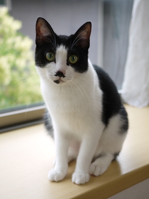 猫のお留守番 メイちゃん編。_a0143140_22050968.jpg