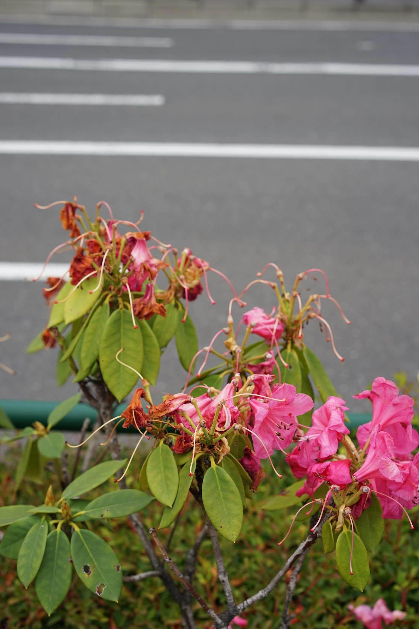 多摩モノレール高松駅〜JR立川駅 1_b0360240_14135668.jpg