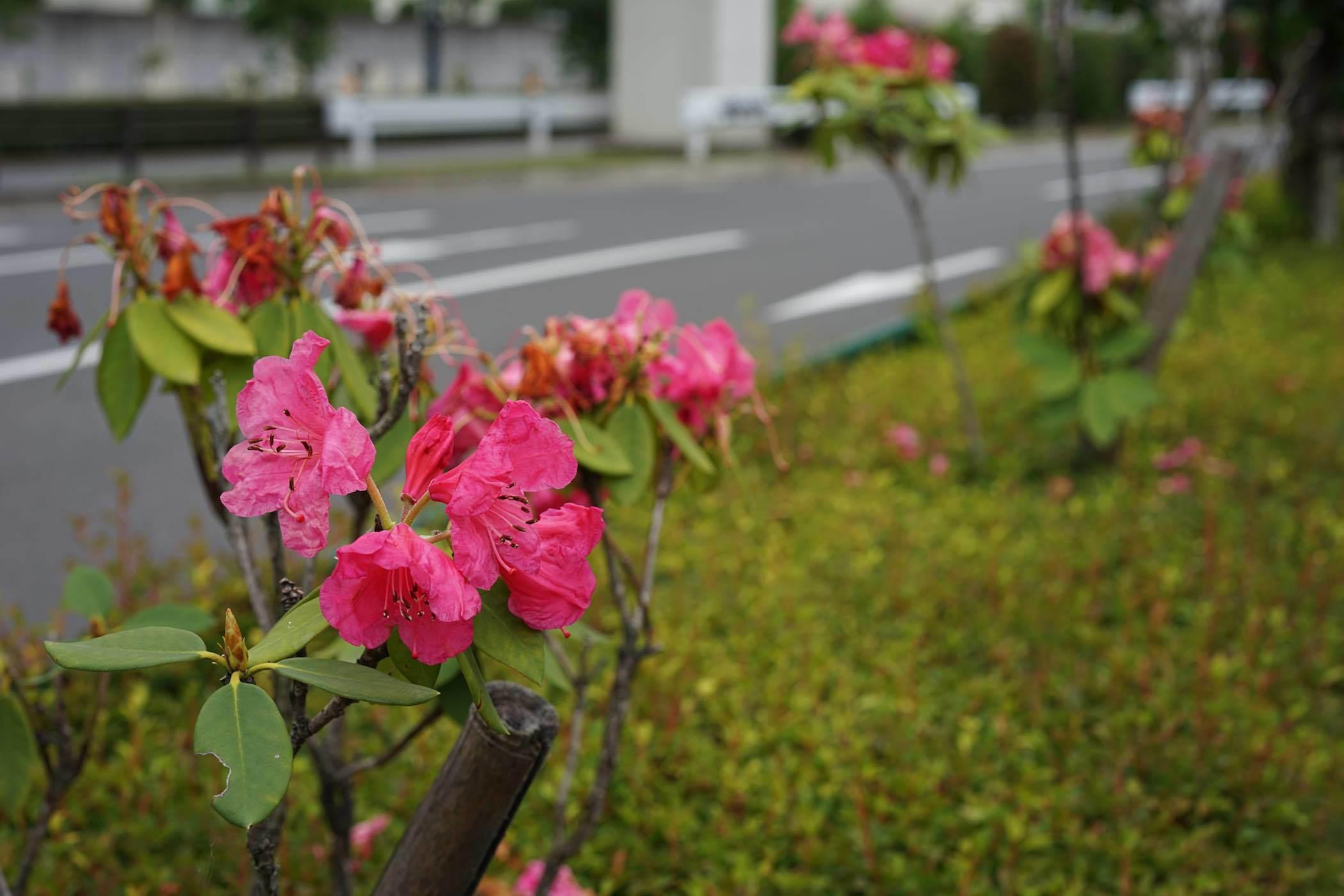 多摩モノレール高松駅〜JR立川駅 1_b0360240_14135690.jpg