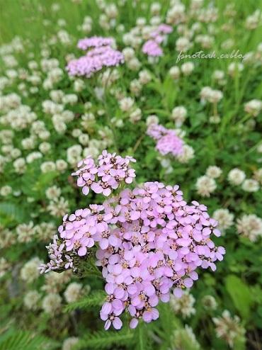 家の周りの花達 追記2件_d0356844_03372492.jpg