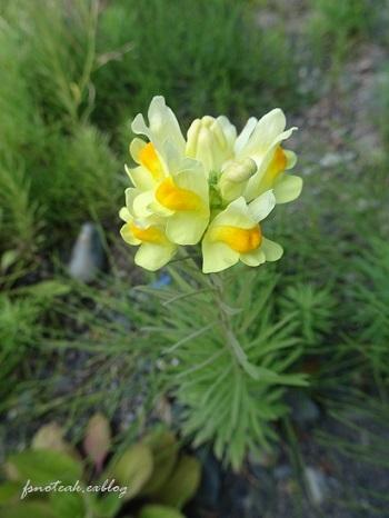 家の周りの花達 追記2件_d0356844_03401185.jpg