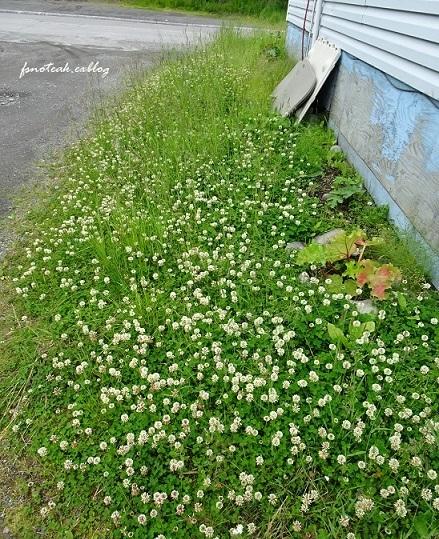家の周りの花達 追記2件_d0356844_03451800.jpg