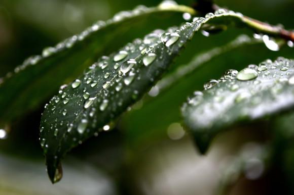 水滴(1)_c0093046_17231716.jpg