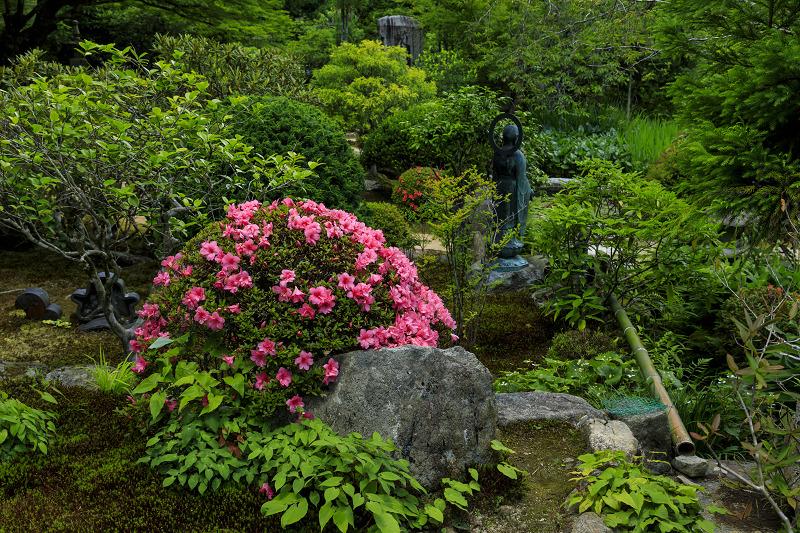 初夏の花咲く実光院_f0155048_22203689.jpg
