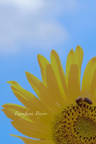 ミツバチとひまわり **_d0344864_19443006.jpg