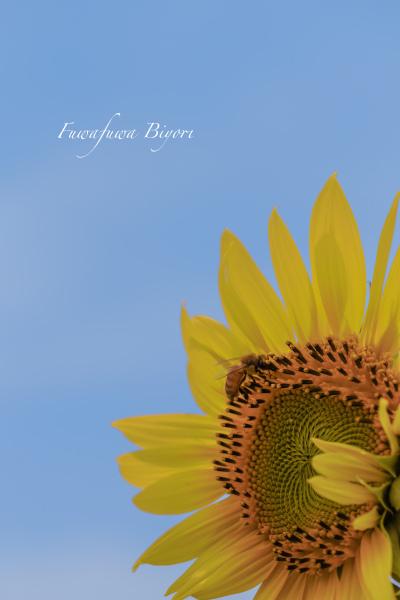 ミツバチとひまわり **_d0344864_19444229.jpg