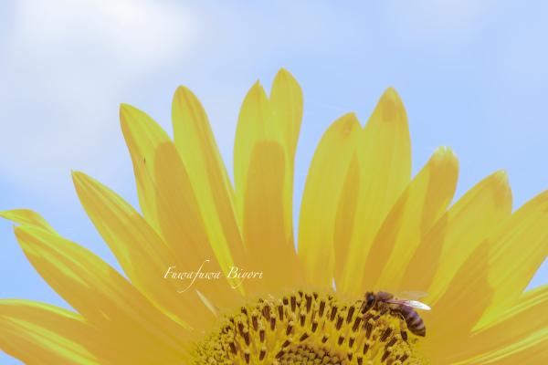 ミツバチとひまわり **_d0344864_19452661.jpg