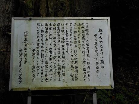 安浦に残るムクノキの巨樹_e0175370_12304183.jpg