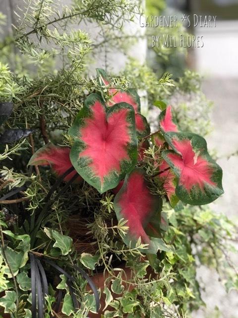 Las hojas para el verano.. 残してきた小鳥_e0365614_10114608.jpg