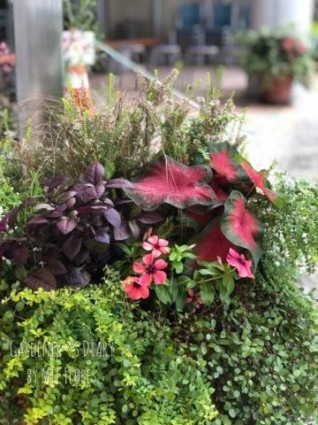 Las hojas para el verano.. 残してきた小鳥_e0365614_10122802.jpg