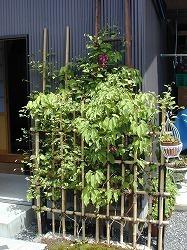 テッセンが咲いていた庭_d0206920_08543723.jpg