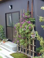 テッセンが咲いていた庭_d0206920_08543738.jpg