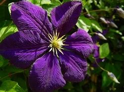 テッセンが咲いていた庭_d0206920_08543781.jpg