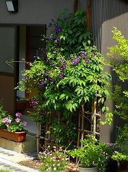 テッセンが咲いていた庭_d0206920_09535379.jpg