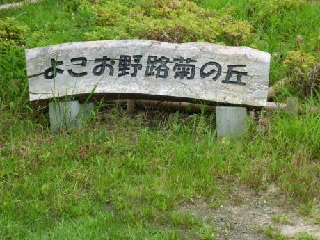 横尾道 ~ 文太郎尾根 ~ 東山_c0218841_11531937.jpg