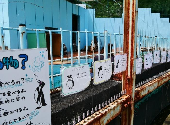 お城の動物園・フンボルトペンギン新参6羽  2020-07-26 00:00_b0093754_20572329.jpg