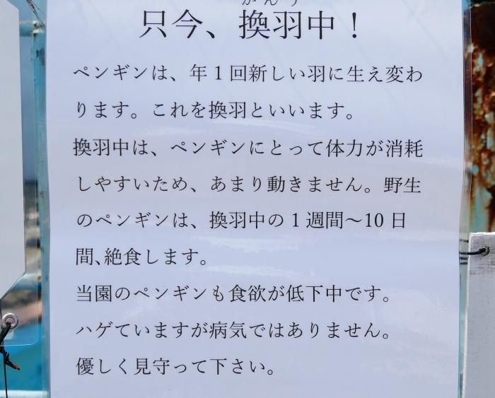 お城の動物園・フンボルトペンギン新参6羽  2020-07-26 00:00_b0093754_20584894.jpg