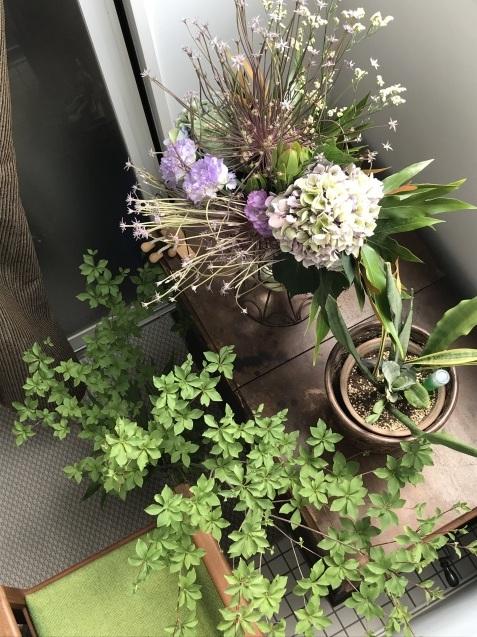 花に囲まれた連休中_f0130693_15484388.jpeg