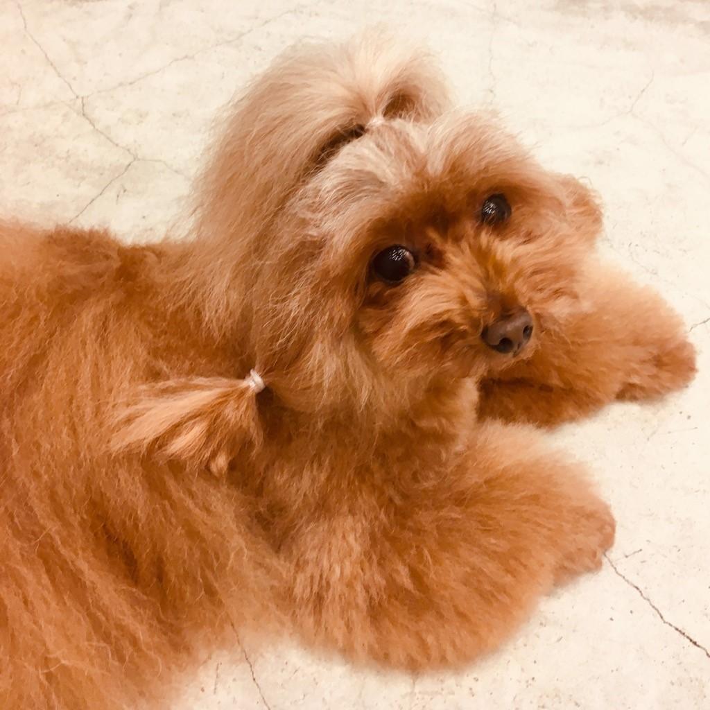 ☆ dogshopMILIEU ☆_d0060413_14492062.jpg