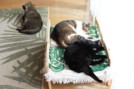 この頃のIKEAの猫ベッド_e0364523_22115563.jpg