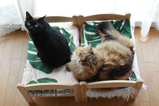 この頃のIKEAの猫ベッド_e0364523_22115574.jpg