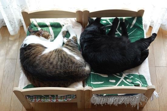 この頃のIKEAの猫ベッド_e0364523_22115575.jpg