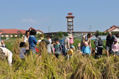 いよいよ「新米」の季節!対面販売ではお米の食べ比べも_c0141652_16465921.jpg