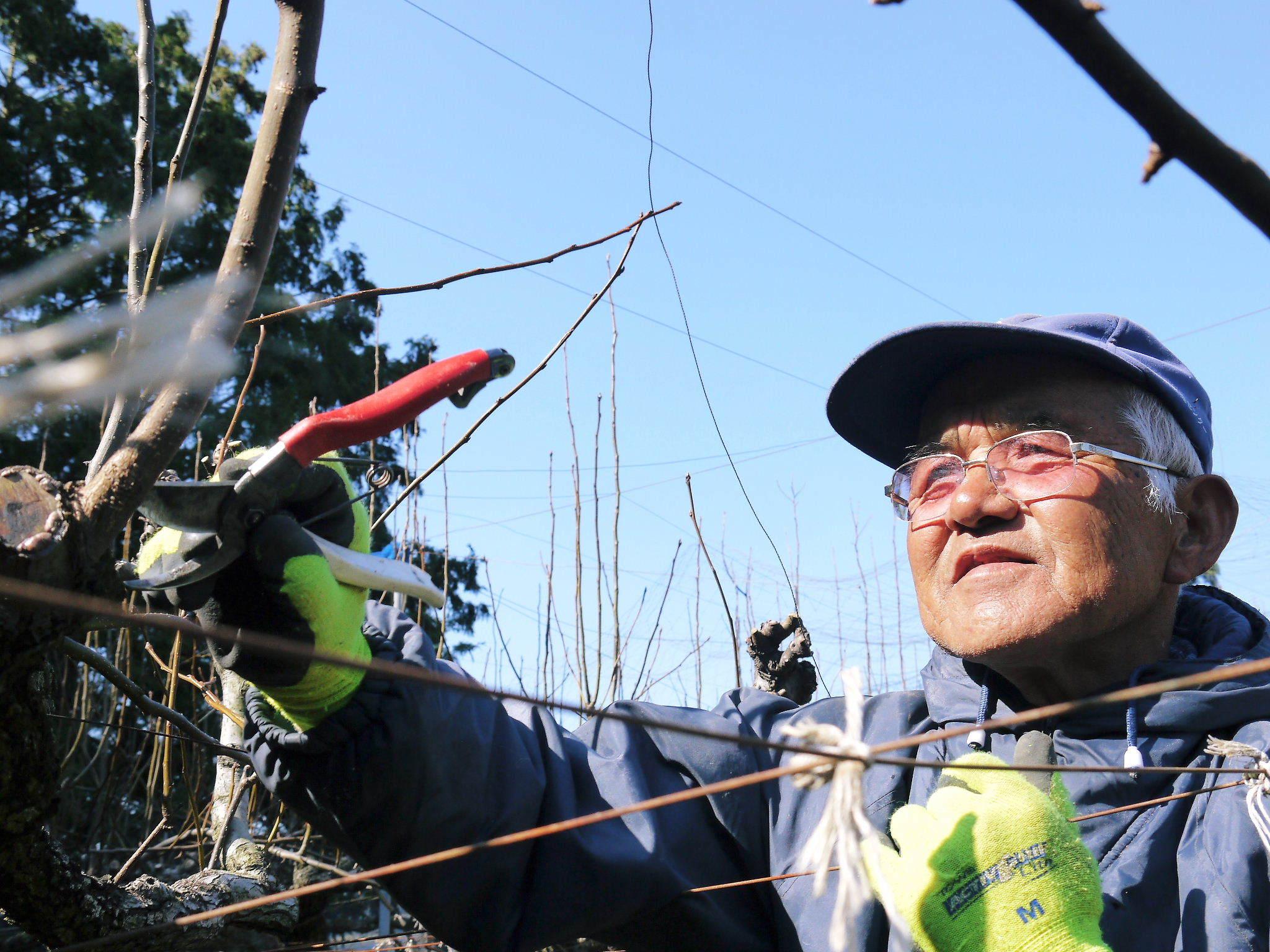熊本梨「幸水」先行予約受付中!岩永農園さんは今年も無袋栽培&樹上完熟にこだわり出荷します!(後編)_a0254656_17151499.jpg