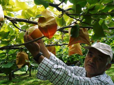 熊本梨「幸水」先行予約受付中!岩永農園さんは今年も無袋栽培&樹上完熟にこだわり出荷します!(後編)_a0254656_17353761.jpg
