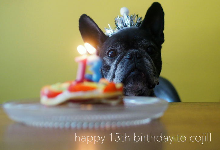happy 13th birthday to cojill_e0243765_14313537.jpg