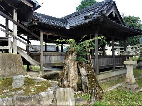 安浦大歳神社のムクノキ伝説_e0175370_21101434.jpg