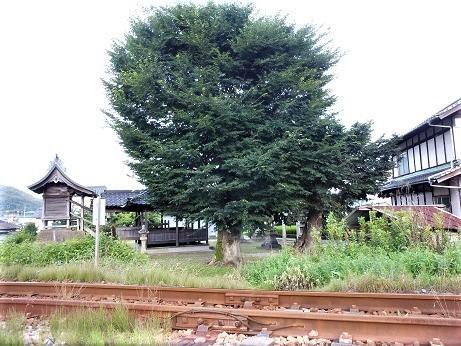 安浦大歳神社のムクノキ伝説_e0175370_21104929.jpg