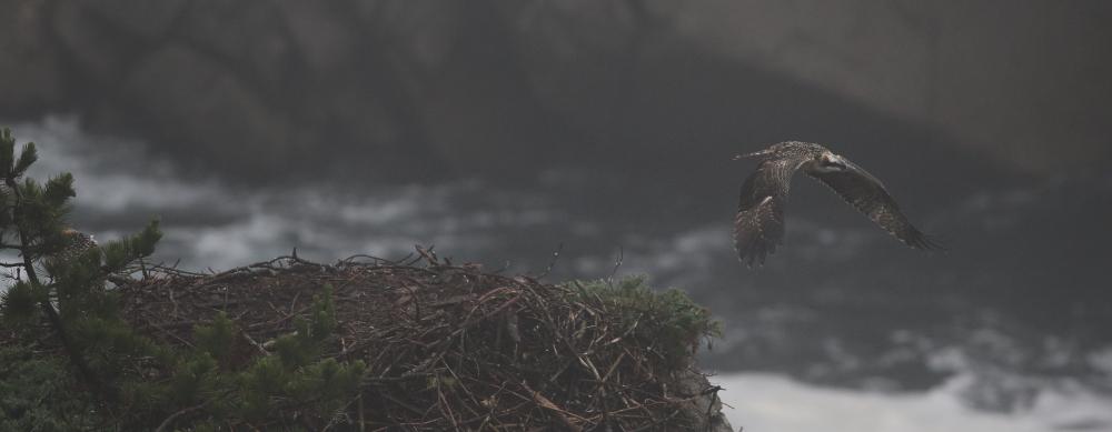 濃霧の中の巣立ち_d0262476_16050864.jpg
