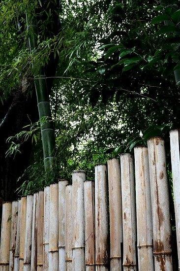 竹、笹リレー その1_e0348392_19355556.jpg