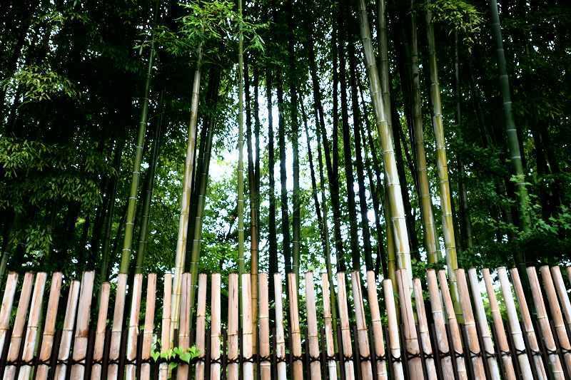 竹、笹リレー その1_e0348392_19360899.jpg