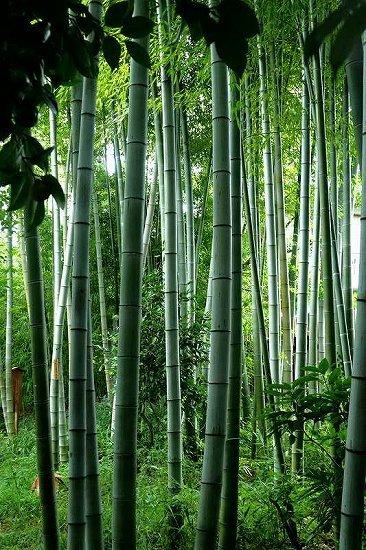 竹、笹リレー その1_e0348392_19362245.jpg